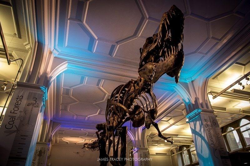 tyrannosaurus rex at Manchester museum