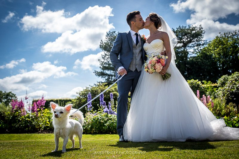 bride groom and their dog